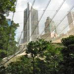 Taken from the very cool aviary in Hong Kong Park, a fave spot for avians & those who wish they were.