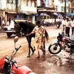 Bombay, India. Among the baffling number of modes of transportation in Bombay are horses like this one, usually as ostentatiously decorated as the carts they draw.