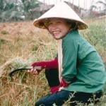 A young woman uses a sickle to harvest the stalks in the now dry field.