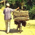 A man takes firewood to the market. Firewood is the primary source of heat for cooking.
