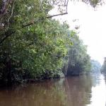 The longest river in Sabah, the Kinabatangan River is also the route Chinese traders used in search of the highly priced bird nests, shark's fins and pearls.