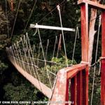 Part of the canopy walkway.